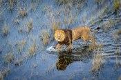 The floods arrive - Okavango Delta