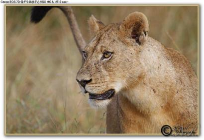 This photo was taken in the Kruger National Park by Nobby Clarke.