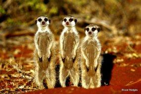 Three's company at Tswalu