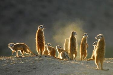 Tswalu Kalahari- South Africa