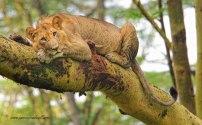 Up a tree - James Gradwell Photography & Photo Tours