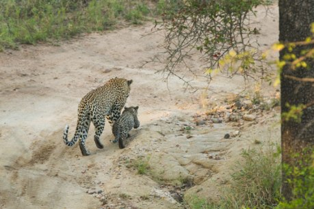 Walking with Mum at Londolozi