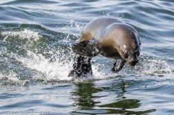 Walvis Bay Namibia - Michael Poliza Photographer
