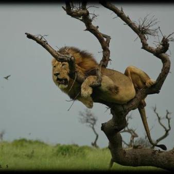 Who says I can't climb ......