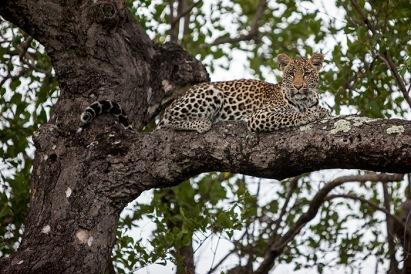 ximpalapala-in-tree-sunken-ey