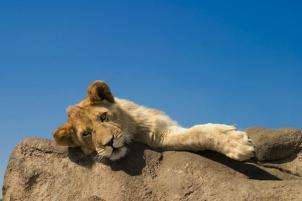 Young male resting - Photo © Mario Moreno