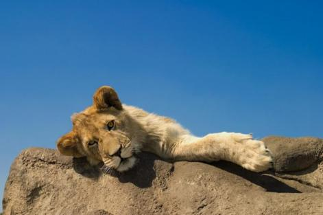 Young male resting - Photo © Mario Moreno