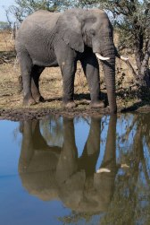 A sleeping elephant bull is oblivious of his reflection in Two Pans.
