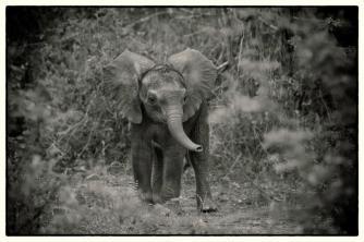 Baby - (Chris Martin Wildlife Photography)
