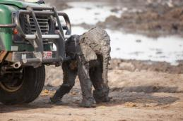 bOut of , but completely covered in thick mud. — at Camp Hwange Zimbabwe.