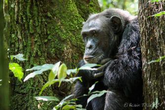 Contemplation - Kelly Okavango