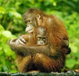 Cuddle by Kelly Okavango