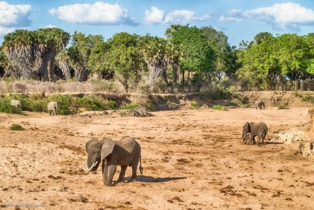 Digging for water - Selous National Park - Michael Poliza Photographer
