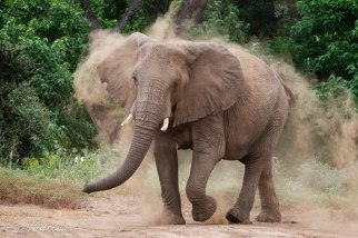 Dust-bath - Isak Pretorius Wildlife Photography