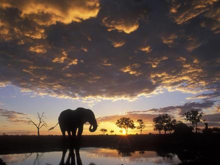 Elephant silhouetted at Sunset, Chobe National Park, Botswana