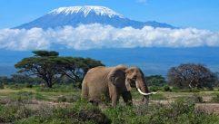 Elephant with Mt. Kilimanjaro, Amboseli National Park, Kenya