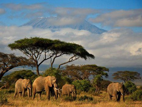 elephants-kenya_Amboseli