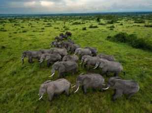 elephants-queen-elizabeth-park-Uganda