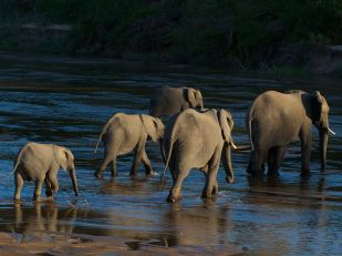 elephants-sand-river_58697_990x742