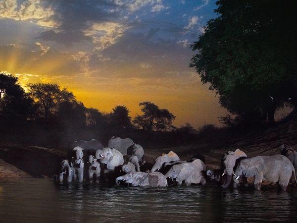 elephants-water-hole_Chad