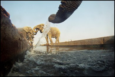 Etosha water channel - Hans Rack