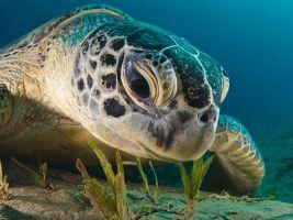 green-turtle-egypt_58925_990x742