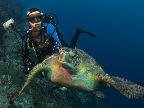 Green Turtle off Cocos Islands - National Geographic