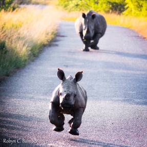 I'm off......... - Robyn C. Bamber Photography