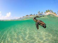 loggerhead-turtle-florida_62679_990x742