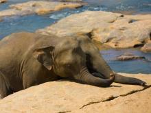 Lovely Elephant Calves