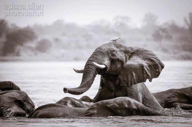 Mana Pools, Zambesi River by Dana Allen - PhotoSafari