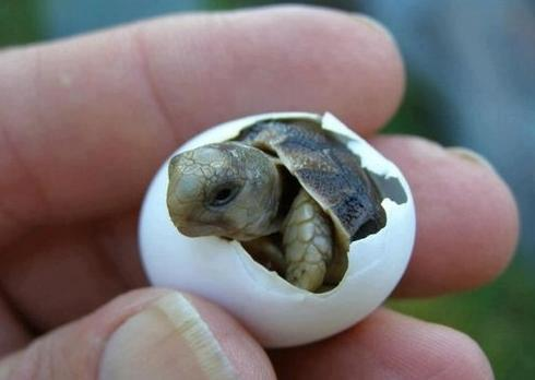 New born turtle