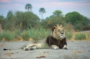 Okavango by Grant Atkinson