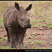 Rhino Calf Singita