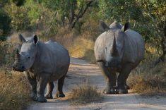 Road Block - Chris Martin Wildlife Photography