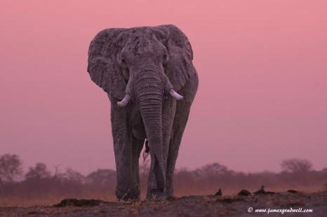 Savuti, Botswana - James Gradwell Photography & Photo Tours