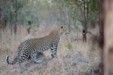 The seldom seen Maliliwane female.