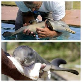 A beautiful baby dolphin.