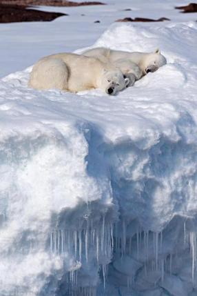 Asleep on the ice