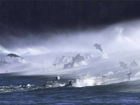 Bottle nose dolphins photographed in South Africa!