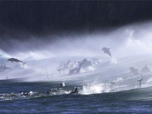 bottlenose-dolphins-surf_3594_990x742