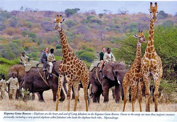 Camp Jabulani - Elephant-back rides