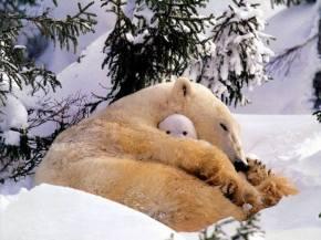 Cuddle