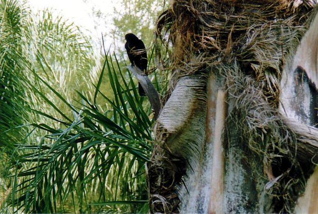 e1 Avian resident