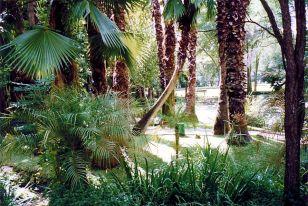 g3 Palm Grove
