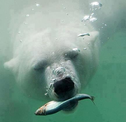 Gotta fish....