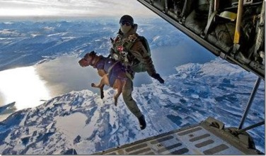 High altitude jump with handler