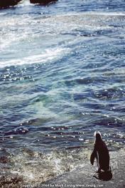 image06a Penguin at Boulders Beach