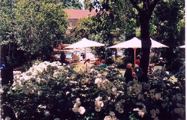 Image29b-Garden Balalaika
