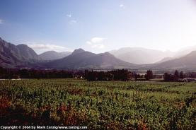 image30a van Rensburg family vineyard - Franschhoek